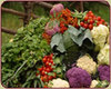 Harvest_veggies